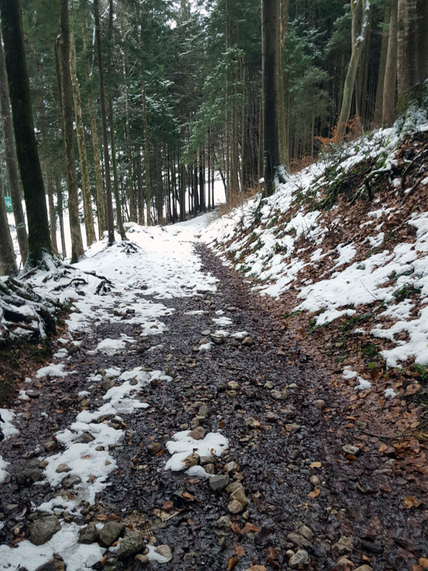 Schneeüberreste im Wald