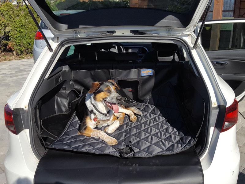 Hund liegt im Kofferraum