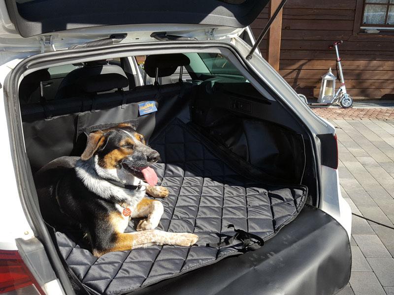 Hund entspannt im Kofferraum