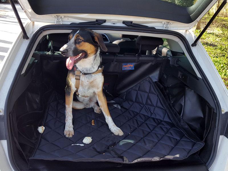 Hund im geöffneten Kofferraum