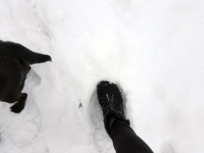 Spaziergang durch den Schnee