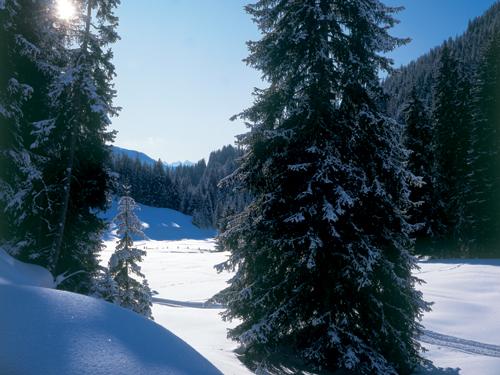 Großansicht - Schneebedeckte Wiesen und Wälder im Wipptal