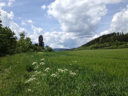 Großansicht - Landschaftsaufnahme Schwarzwald im Sommer