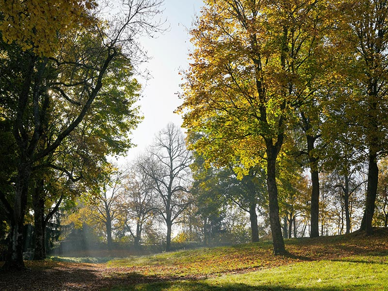 Großansicht - Herbst