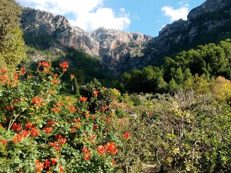 Großansicht - Ein Blick in die Tramuntana Berge @DorisWorld.at