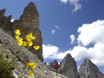 Felswand der Dolomiten