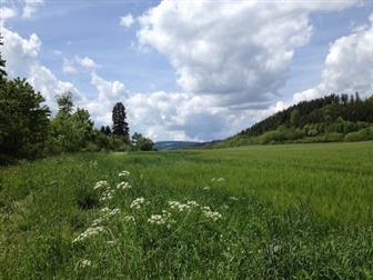 Landschaftsaufnahme Schwarzwald im Sommer