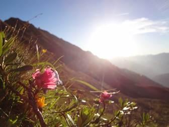 Aussicht über die Wiesen und Berge von der Bergstation der Spieljochbahn