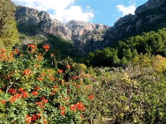 Ein Blick in die Tramuntana Berge @DorisWorld.at