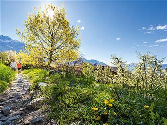 Wanderweg mit Blick auf das Mittelgebirge