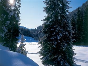Schneebedeckte Wiesen und Wälder im Wipptal