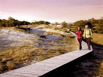 Ein Pärchen das auf einem Holzsteg inmitten der Dünenlandschaft von Mecklenburg-Vorpommern spaziert
