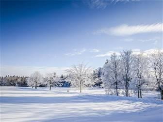 Schneedeckte Wiese und Bäume im Sonnenschein