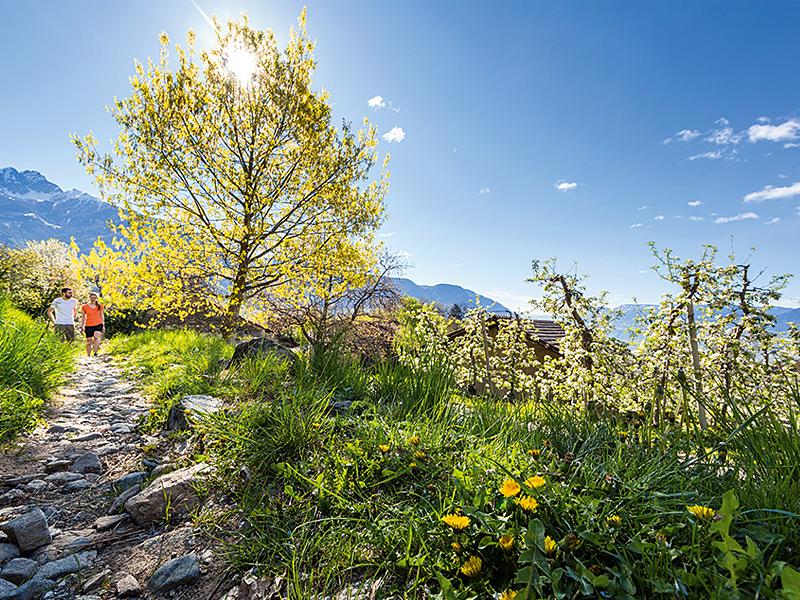 Großansicht - Wanderweg mit Blick auf das Mittelgebirge