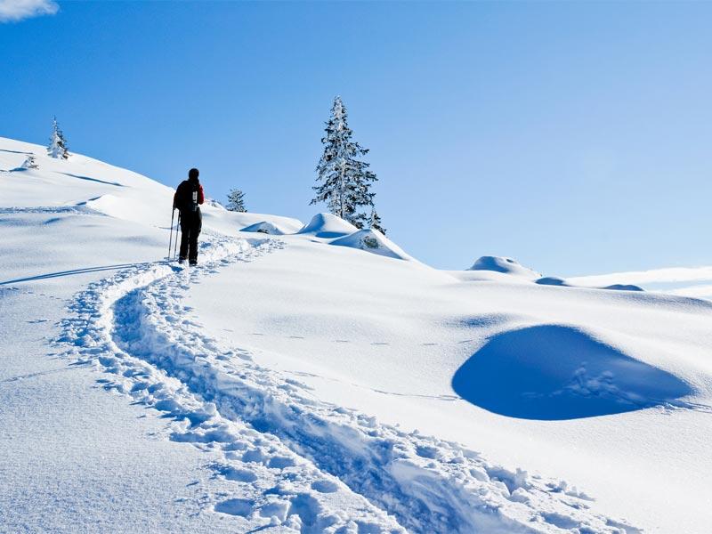Großansicht - Skitourengeher in schneeverschneiter Landschaft