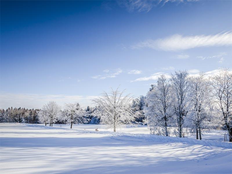 Großansicht - Schneedeckte Wiese und Bäume im Sonnenschein