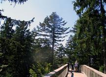 Familie spaziert auf einer Brücke durch den Wald
